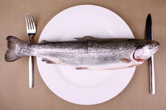 Huge brown trout on white plate with cutlery Royalty Free Stock Image