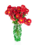 Huge bunch of  red autumn chrysanthemum flowers in green vase Royalty Free Stock Image