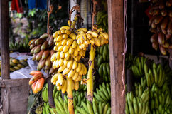 Huge bunches of bananas on sale in Sri Lanka Stock Images