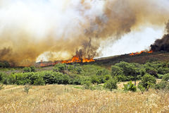Huge bush fire at the westcoast in Portugal Stock Image