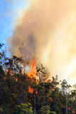 Huge Bushfire Flames Royalty Free Stock Image