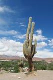 Huge cactus stock image