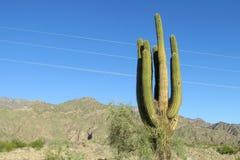 Huge cactus stock photo