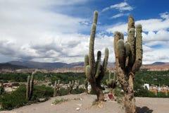 Huge cactus in the city, los Cardones Royalty Free Stock Photos