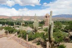 Huge cactus in the city, los Cardones Royalty Free Stock Photo