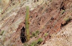 Huge cactus in desert mountains Stock Image