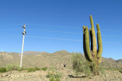 Huge cactus near electric line stock photo