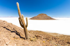 Huge cactus Salar De Uyuni island volcano mountains scenic lands Royalty Free Stock Images