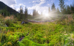 Huge carpet of green moss Royalty Free Stock Image