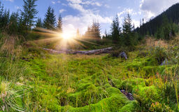Huge carpet of green moss Stock Photography