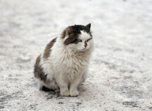Huge cat in the park Stock Images