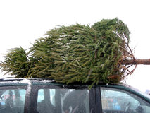 Huge Christmas tree. Tied to the roof on a minivan Stock Images