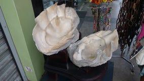 Huge clamshell Stock Photo