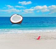 Huge coconut Stock Image