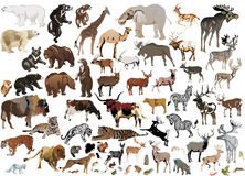 Huge collection of color animals. Illustration with animals collection isolated on white background Royalty Free Stock Photo