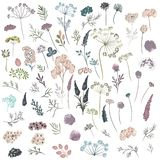 Huge collection of florals, plants, flowers. Vector in watercolo Royalty Free Illustration