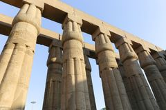 Huge columns as lotus flower Luxor temple. Day view of Luxor Temple Luxor, Egypt royalty free stock photo