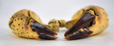 Huge crab claws. Royalty Free Stock Photography