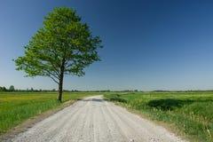 Huge deciduous green tree next to gravel road, horizon and blue sky. Huge deciduous green tree next to gravel road, horizon and cloudless blue sky stock image