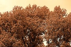 Deciduous tree in the evening. A huge deciduous tree with dense foliage in the late evening stock image