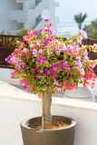Huge decorative pot with flowers Stock Images