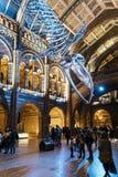 Huge dinosaur bones at Central Hall, Natural History Museum stock photography