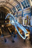 Huge dinosaur bones at Central Hall, Natural History Museum stock photos
