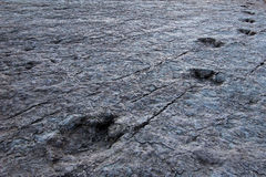 Huge dinosaur footprints, Maragua, Bolivia Stock Photo