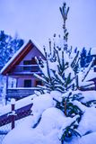 Snow covered spruce against the background of the rural house stock photos