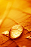 Huge drop of water. Macro photograph of the droplet of water on the autumn leaf Stock Photo