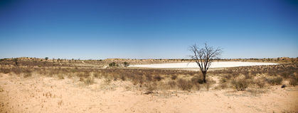 Huge dry pan in Botswana. Facing the lodge royalty free stock photography