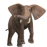 Huge elephant. Giant elephant. 3D render with clipping path and shadow over white royalty free illustration