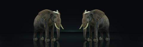 Huge elephant in dark background. 3d rendering stock illustration