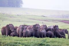 Huge Elephant Herd Stock Photos