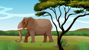 A huge elephant. Illustration of a huge elephant stock illustration