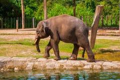 Huge elephant in the zoo stock photos