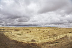 Huge field Stock Photos