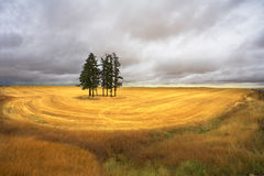 Huge field after a harvest Royalty Free Stock Image
