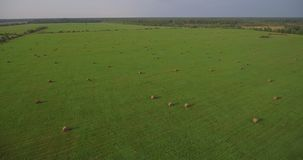 Huge field with hay bales, aerial descenting stock video