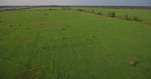 Huge field with hay bales, aerial the rising up stock video