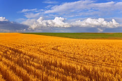 Huge field in state Montana Royalty Free Stock Photos