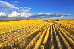 Huge fields after a harvest Royalty Free Stock Images