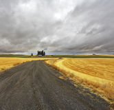 Huge fields  of Montana Royalty Free Stock Photography