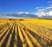 Huge fields of Montana after a harvest Royalty Free Stock Photos