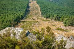 Huge firebreak and pine tree forest. Wide angle of huge firebreak and pine tree forest in the mountain Stock Image