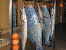 Huge fish hanging on the hooks stock images
