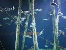 Huge fish tank stock photo