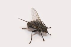 Huge fly Stock Images