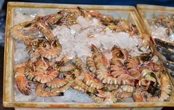 Huge fresh shrimp sold on ice. Thailand Stock Image