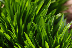 Huge grass Royalty Free Stock Photography
